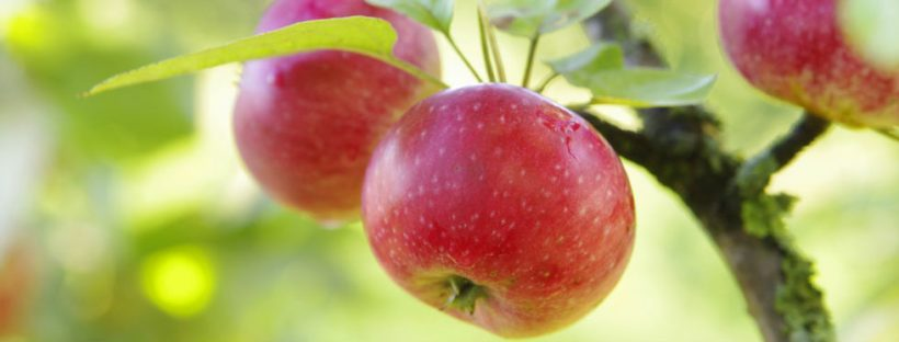 La qualità di un franchising immobiliare si riconosce dai suoi frutti